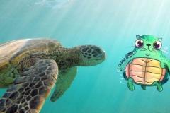 Turtle_Honu